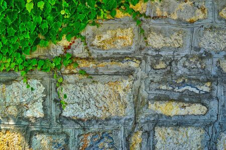 old stone wall for background with green plant leaves in the one corner in the foreground