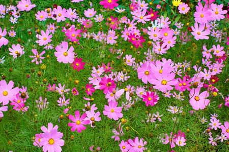 Lots of beautiful pink flowers for a natural background Stock fotó