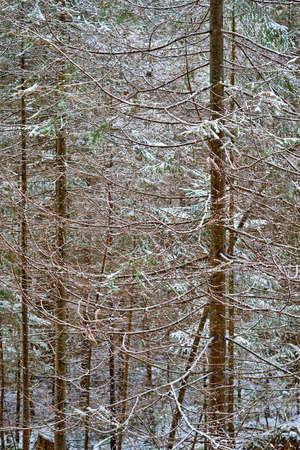 landscape of winter forest close-up for natural background Stock fotó