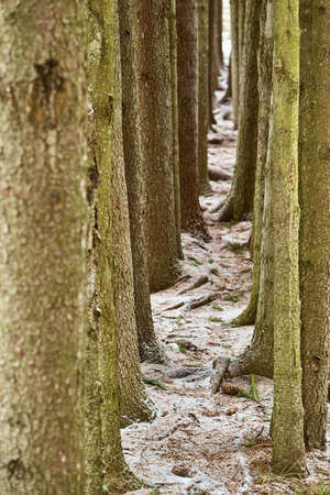 abstract gallery or rows of tree trunk parts close-up