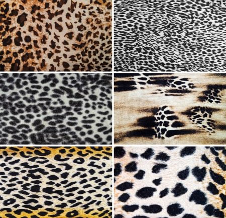Leopard textures photo