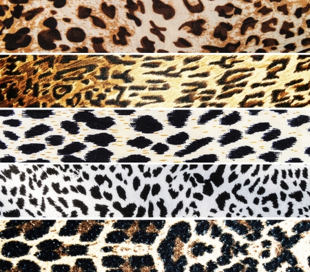 snakeskin: Set of Leopard textures  Stock Photo