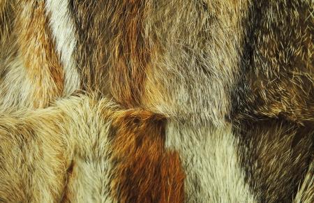 peltry: Fox fur texture