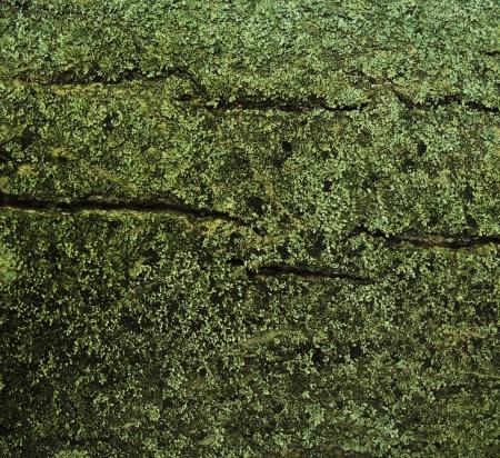 Lichen tree background photo
