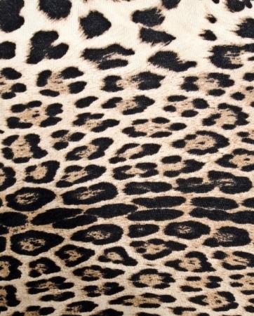 leopard skin: Leopard texture