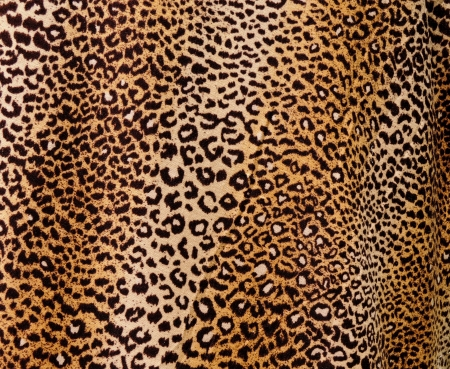 Leopard background photo