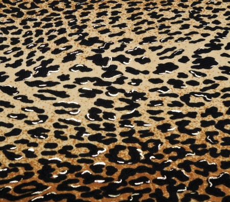 Wild animal skin pattern - material Stock Photo - 20920111
