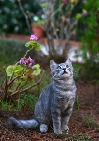 beautiful cat looking up photo