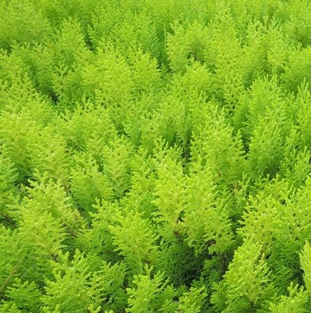 Green bush in nature photo
