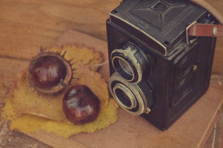 Old camera and fresh  chestnut on book photo