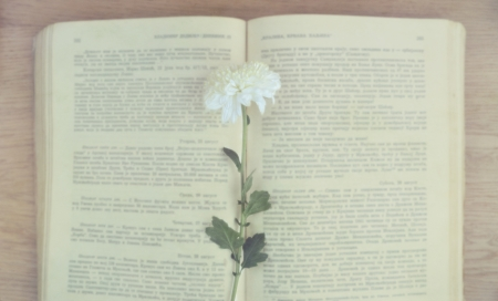 Old vintage book with flower photo