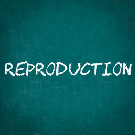 reproduction: REPRODUCTION written on chalkboard Stock Photo
