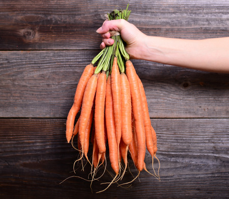 zanahoria: Manojo de zanahorias frescas en la mano