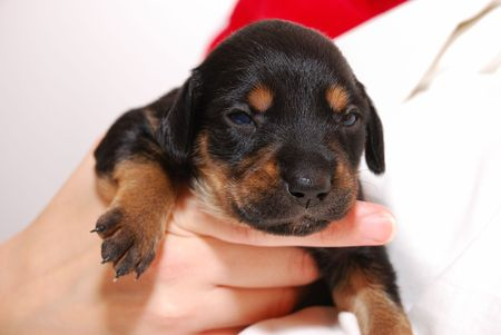 distressing: Black puppy