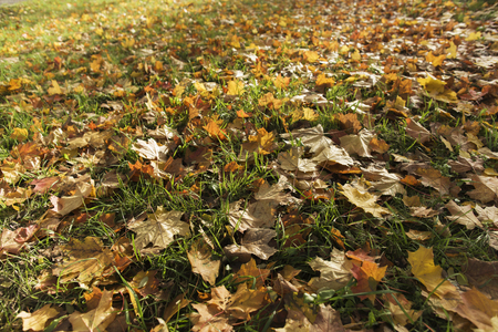 Autumn lawn with fallen leaves from trees Stock Photo