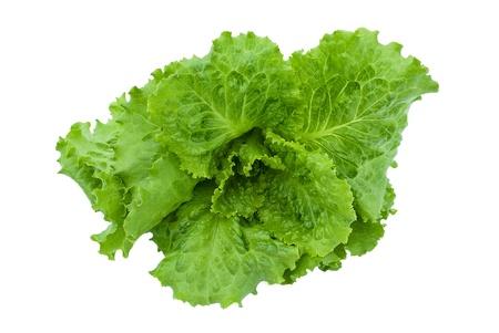 romaine: Lettuce isolated on white background