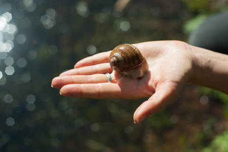 slithery: Snail on the hand outdoors Stock Photo