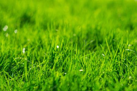 背景を草します。緑の草のテクスチャ
