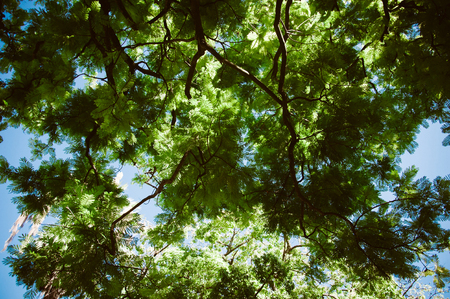 twiggy: Green forest. Tree with green Leaves, blue sky and sun light. Bottom view background
