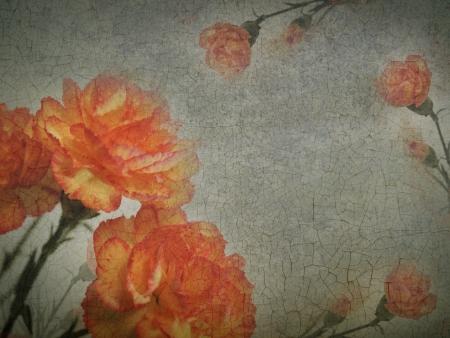 Grunge postcard background with orange flowers carnations   Stock Photo