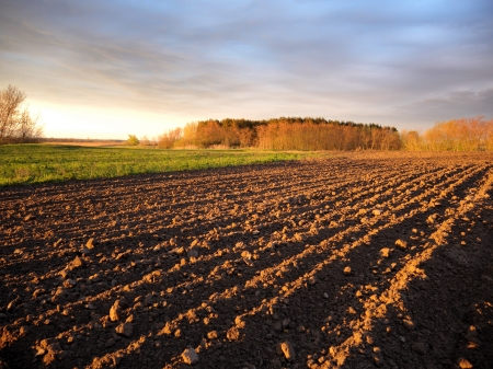 humus: Black ploughed field under blue cloudy sky Illuminated sunrays  in springtime