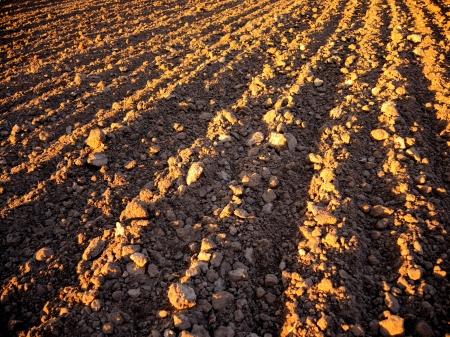 Black ploughed field  Illuminated sunrays in springtime. Stock Photo