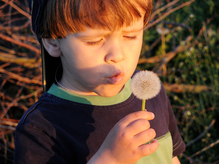 Little boy blowing dandelion in the rays of the setting sun.