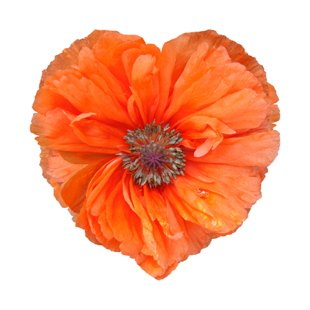 Red poppy flower isolated on white background. Red poppy in the form of heart. Foto de archivo