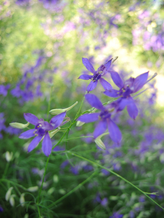 Beautiful spring floral background with small purple flowers on grass background. Foto de archivo