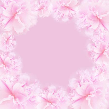 Pink flower on soft pastel color in blur style. Blossom - pink flower, floral background. Pink  background.