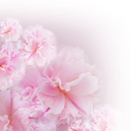 Pink flower on soft pastel color in blur style. Blossom - pink flower, floral background. Pink  background.