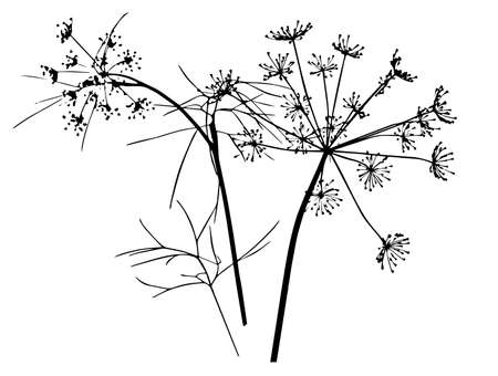 Vector drawing of a sprig of dill. Ink sketch. Manual work. Great idea for postcard, calendar, holiday invitation, wrapping paper. Suitable for decorating recipes, frames, diaries. Vectores