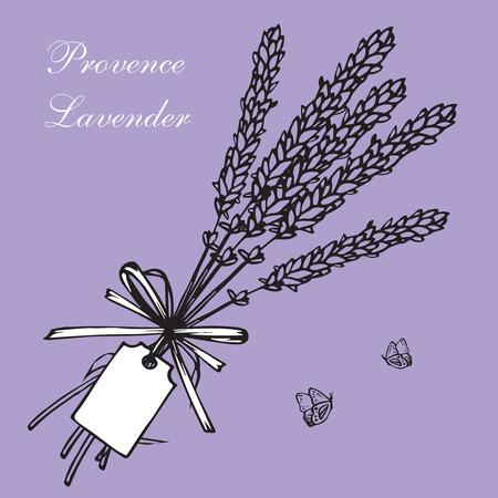herbal background: Vintage hand drawn lavender vector illustration isolated on violet background. Engraving illustration.  Lavender herbal bouquets and label in vintage style Illustration