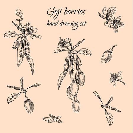 Hand drawn goji berries monochrome set.  Engraving illustration.  Nature organic superfoods design elements.  Vector illustration Ilustração