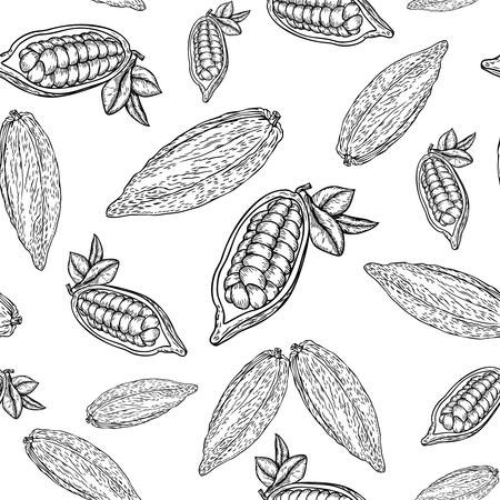 nutrient: Cocoa hand drawn seamless pattern on white background. Cocoa botany vector illustration. Doodle of healthy cocoa nutrient food. Cocoa engraving sketch etch line.  Food cocoa dessert drink ingredient