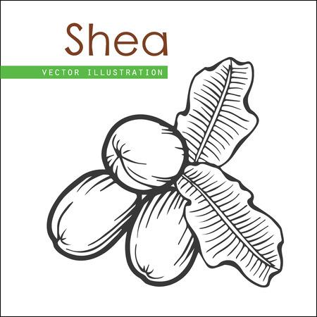 Karité plant, bessen, fruit natuurlijke organische boter ingrediënt. Hand getrokken vector schets gegraveerde illustratie. Zwarte Shea noten op een witte achtergrond. Behandeling, zorg, voedselingrediënt Vector Illustratie