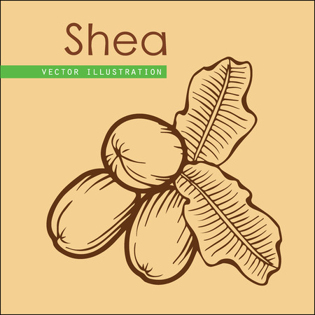treatment plant: Shea nuts plant, berry, fruit natural organic butter ingredient. Hand drawn vector sketch engraved illustration. Brown Shea nuts isolated on beige background. Treatment, care, food ingredient