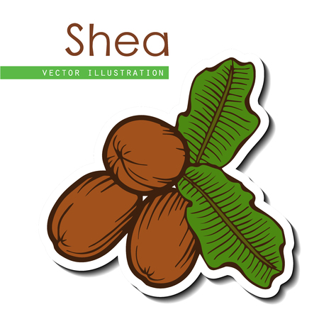 Shea nuts plant, berry, fruit natural organic butter ingredient. Hand drawn vector sketch engraved illustration. Brown Shea nuts sticker isolated on white background. Treatment, care, food ingredient Иллюстрация