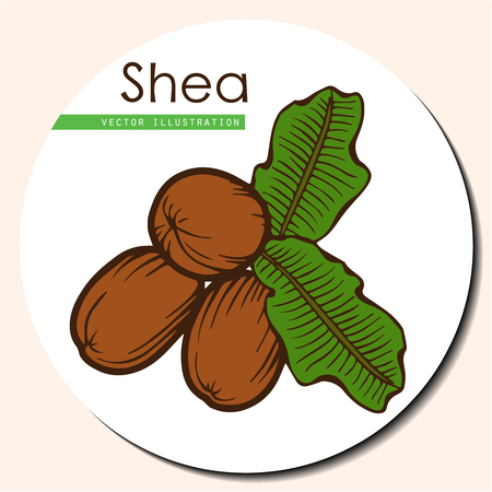treatment plant: Shea nuts plant, berry, fruit natural organic butter ingredient. Hand drawn vector sketch engraved illustration. Brown Shea nuts sticker isolated on white background. Treatment, care, food ingredient Illustration
