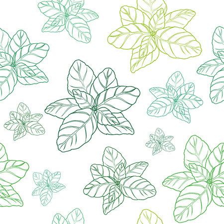 Hand drawn basil seamless pattern  on white background.  Herbal Ingredient for traditional cuisine, medicine, treatment, cooking, gardening. Engraved style vector illustration. Green organic, eco herb