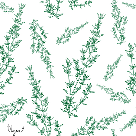 Hand drawn seamless pattern thyme  plant with leaves on white background. Vintage spicy herbs sketch.  Doodle cooking ingredient, seasoning.  Herbal engraved style vector illustration. Italian cuisine