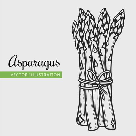 Jedzenie wegetariańskie. Ręcznie rysowane szparagi na białym tle. Ilustracja wektorowa rocznika warzyw. Może być stosowany do pakowania papieru, festiwalu ulicznego, targu rolników, targów wiejskich, sklepu, menu, kawiarni, restauracji;
