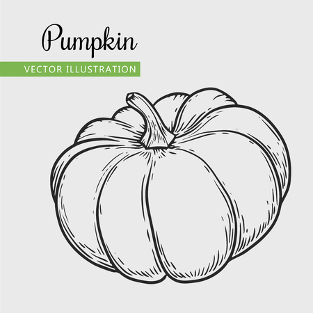 Hand drawn isolated pumpkin Vector vintage vegetables illustration.