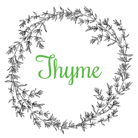 Hand drawn thyme plant wrench with leaves isolated on white background.