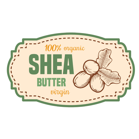 Shea nuts vector label plant. Hand drawn engraved vector sketch etch illustration. Organic butter. Cosmetics ingredient.