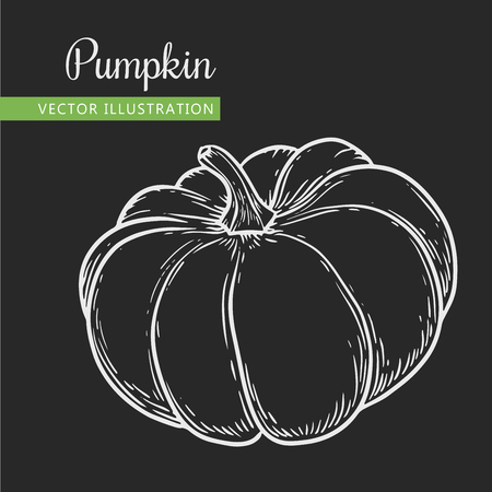 Vegetarian food. Hand drawn isolated pumpkin.  Vector vintage vegetables illustration.  Can be used for wrapping paper, street festival, farmers market, country fair, shop, menu, cafe, restaurant