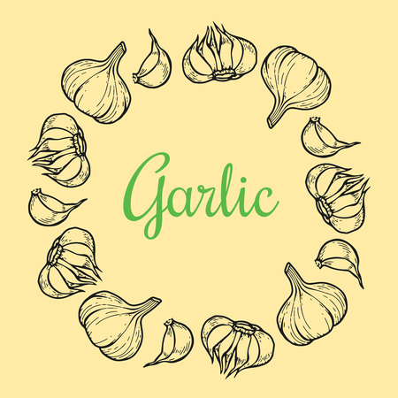 Vector garlic wreath for menu, posters. Isolated spice product. Hand drawn retro plant. Ilustração