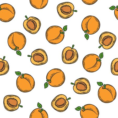 Vector  apricot  engraving seamless pattern on white background. Vintage hand drawn illustration for menu, ads Banco de Imagens - 143930106