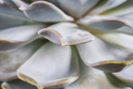 macrophotography: Close up picture of a desert plant - cactus Stock Photo