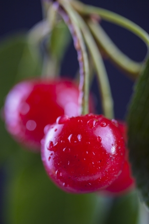 macrophotography: Close up shoot of a red cherries fruits
